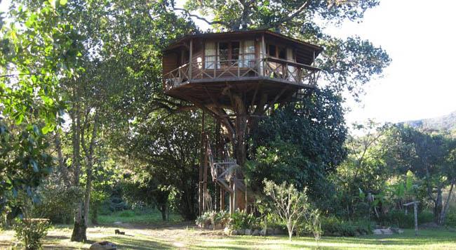 casas na árvore no Brasil