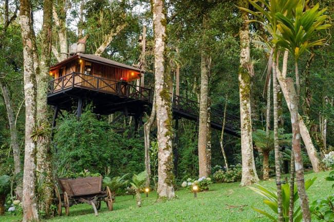 casas na árvore no Brasil 4