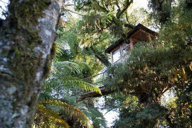 casas na árvore no Brasil 8