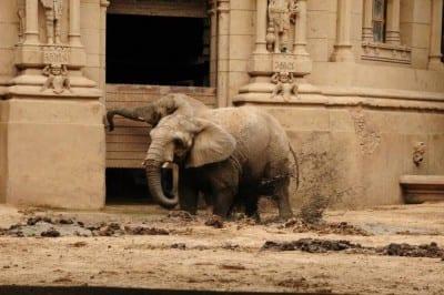 Zoológico de Buenos Aires passa por transformação para ser Ecoparque Interativo