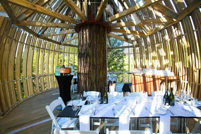 redwoods-treehouse6