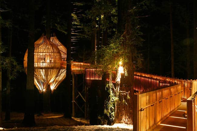 redwoods-treehouse8