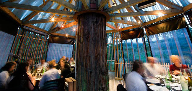 redwoods-treehouse9