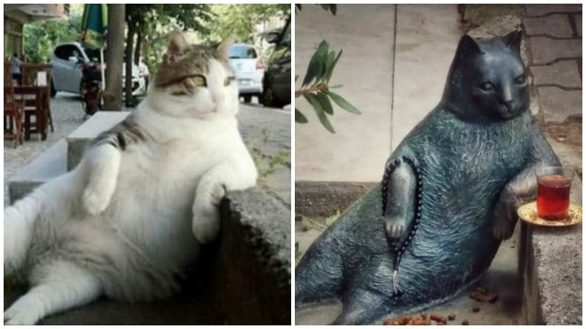 Istambul ganha estátua do 'gato mais tranquilo do mundo'