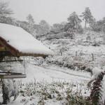 Abaixo de zero: cidades para ver neve no Brasil