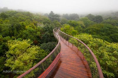 A incrível passarela que passa por cima de árvores na Cidade do Cabo